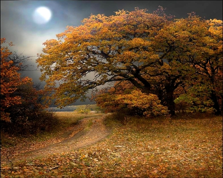 MOON FALL - autumn, overcast, light, path, trees, fall, forest, scenery, moon