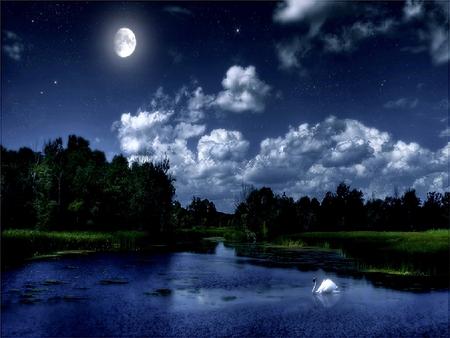 NIGHT'S TALE - light, blue, lake, trees, swan, clouds, moon, night, plants