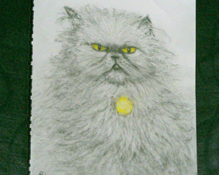 a drawing of blossom - gold, grumpy, pencil drawing, adorable, cat