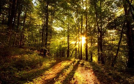 Sunlit Forest - forest, green, sunlight