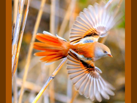 Flying Bird - beautiful, flying bird, picture