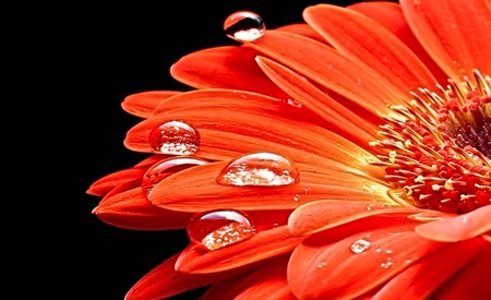Lovely - lovely, orange, dew, beautiful, drops, diamonds, nice, water, flower, flowers, nature, petals, daisy