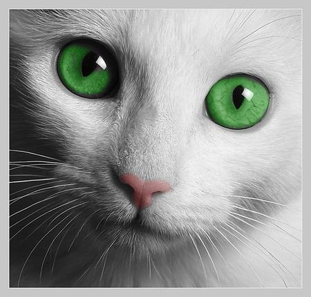 Comments On Cat Green Eyes Cats Wallpaper Id 347252 Desktop