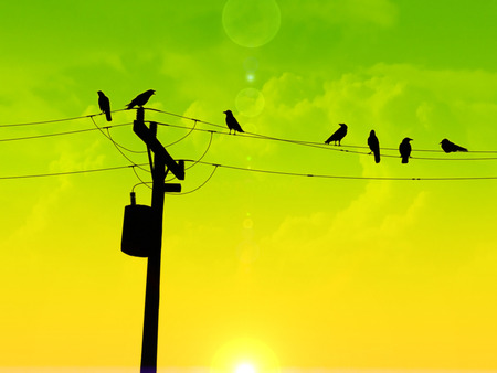 Dusk To Dawn - sun, green, telephone pole, birds, yellow, morning, clouds, wires