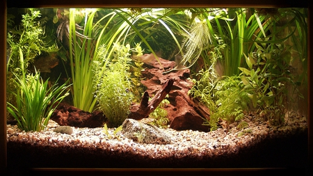 beautiful aquarium - beautiful, aquarium, water, plants