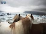 Huddling Horses
