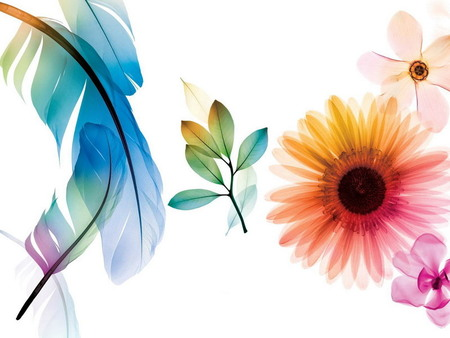 flowers and feathers textures & abstract background
