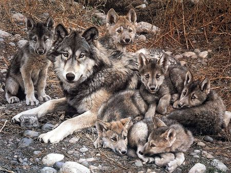 Wolf With Cubs - family, art, lobos, animal, puppies, cubs, wolves, animals, dogs, familia