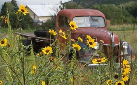 Old Truck Sunflowers Ford Cars Background Wallpapers On
