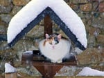 Cat in Winter