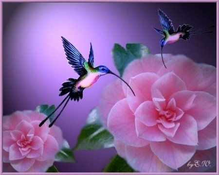 Beautiful Flowers Flowers Nature Background Wallpapers On