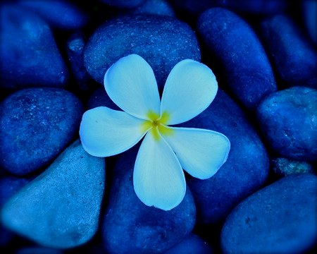 Pretty flower with pebbles flowers nature background wallpapers pretty flower with pebbles mightylinksfo