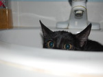 Kitty in Bathroom Sink