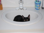 A Bit of Fur in the Sink