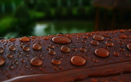 Drops... - beautiful, drops, nice, green, nature, rain