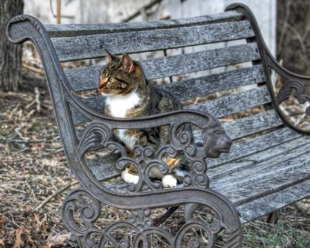 Be The Bench - bench, cat