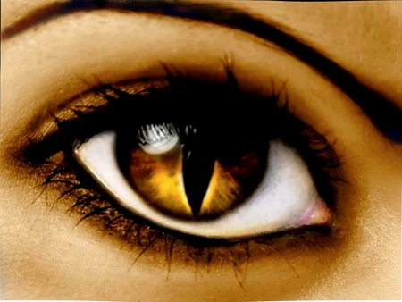 CAT's EYE  - woman, brow, brown, cat eye, lashes, eye, cornea