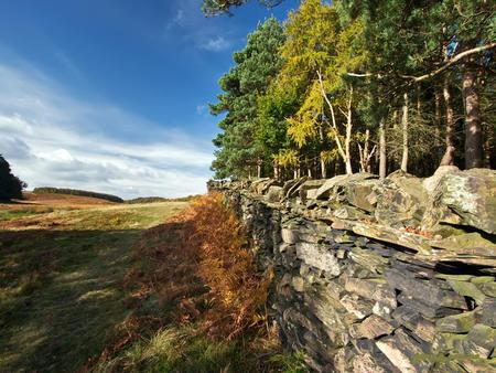 Stone Wall And Trees - stone wall, blue, sky, nature, brush, trees