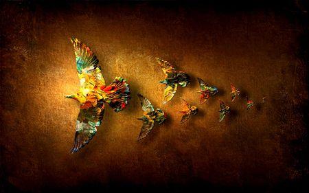 coloured birds - colour, birds, fly