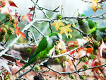 street parrots