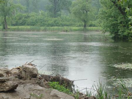 Rain drops - lake, trees, rain