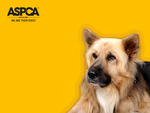 ASPCA Aslan