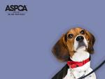 ASPCA Krusty