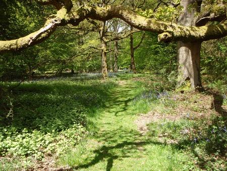 Bluebell Path - flowers, sunshine, bluebells, paths, oxfordshire
