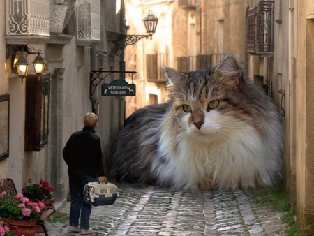 Giant Cat - cool, picture, giant cat