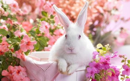 white rabbit story - animals, rabbit