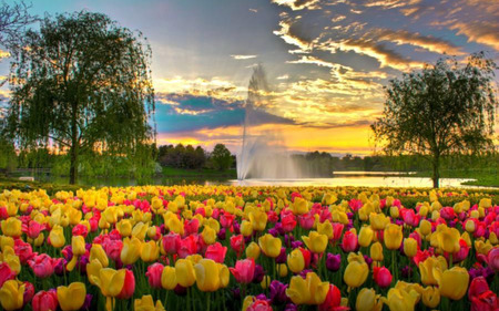 Tulip Park - tulips, water, sunset, clouds, trees, weeping willow, lake, fountain