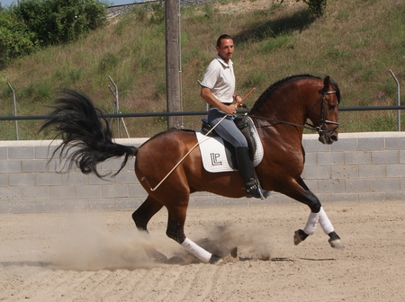 pics for gt bay andalusian horse