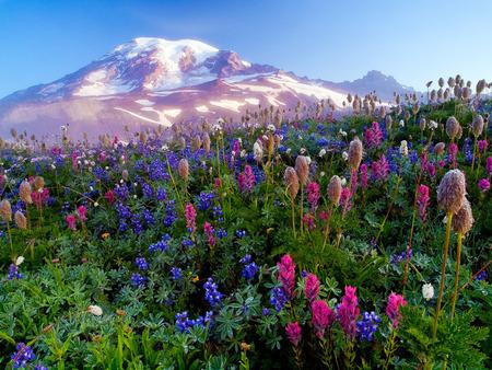 peisaj montan - munte, flori, zapada, culoare
