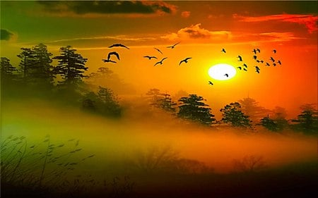 Morning Mist - beauty, sunset, birds, sky, ray, mist, trees