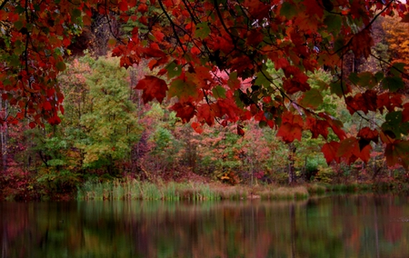 RED FALL LAKE - colors of fall, fall leaves, fall, red tree, colors of autumn, beautiful autumn path, autumn, red fall, autumn waterfall, leaves, autumn leaves, red fall tree lake, red, trees, lake