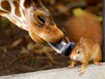 giraffe and squirrel with Love