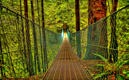 Bridge Of Destiny - beauty, bridge, path, forest, journey, nature