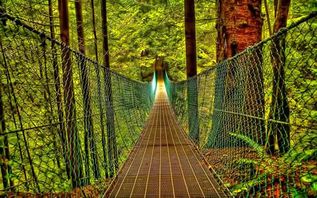 Bridge Of Destiny - beauty, forest, bridge, journey, path, nature