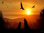 Howling Wolves At Sunset
