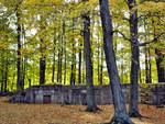 Autumn Crypt-ology