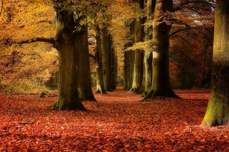 magic forest - forest, nature, trees, red, leaves, yellow