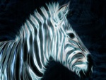 Digital Zebra