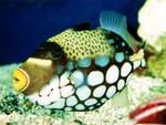 Sea Life 30