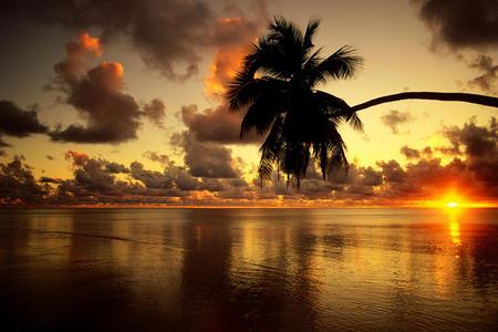 sunrise - sunrise, clouds, sky, water, palm tree, bright, sun