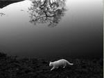 White-reflection