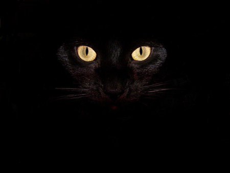 Out-Of-The-Shadows - kitty, photos, kittens, cat, black cats, kitten, cats, animals