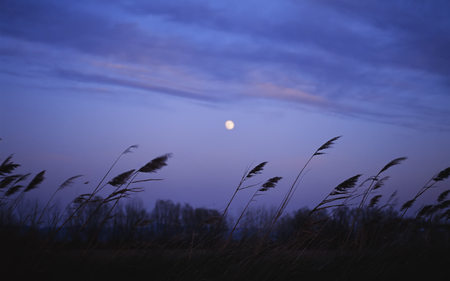 Light breeze (WDS) - light breeze, fields, widescreen, photography, wds, field, night
