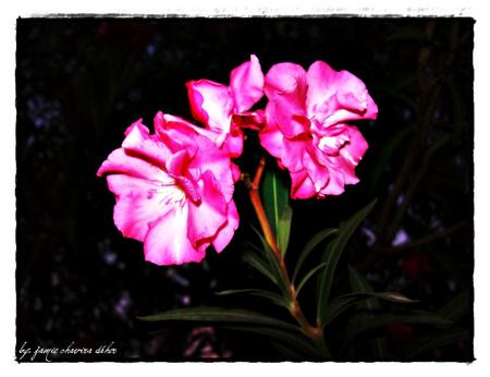 Pink Floyd Flowers Nature Background Wallpapers On Desktop Nexus