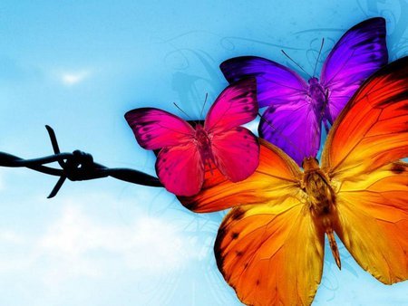 THE BUTTERFLY - butterfly, colorful, purple, orange, blue, pink, red