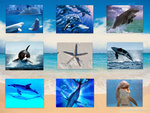 Collage of Dolphins and Whales